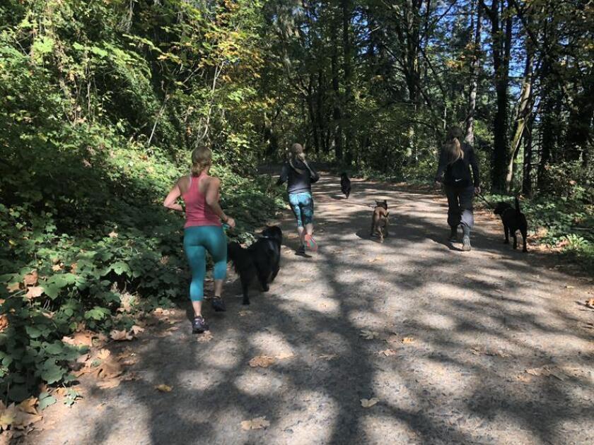 Fotografía fechada el 22 de octubre de 2018 que muestra a dos mujeres mientras corren en el bosque del parque natural Forest Park, en la ciudad de Portland, Oregón (Estados Unidos). EFE