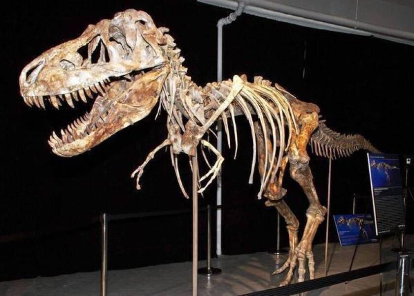 A Florida man pleaded guilty last month to smuggling and other charges related to this Tyrannosaurus bataar skeleton, which originated in Mongolia.