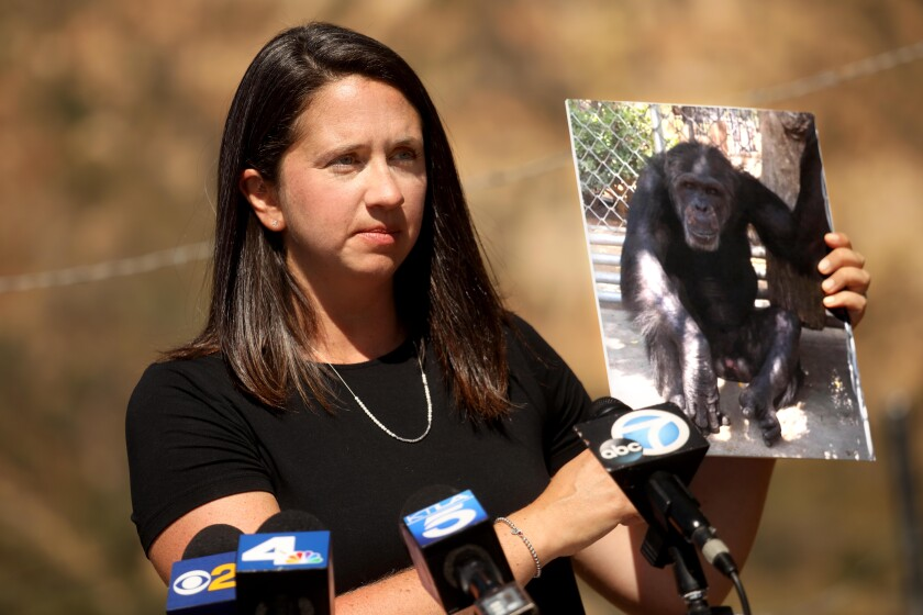 Erika Fleury, program director with North American Primate Sanctuary Alliance