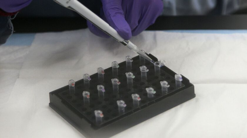 A criminalist works on mitochondrial DNA testing at the State of California Department of Justice Jan Bashinski DNA Laboratory in Richmond, Calif on Feb. 17, 2012.