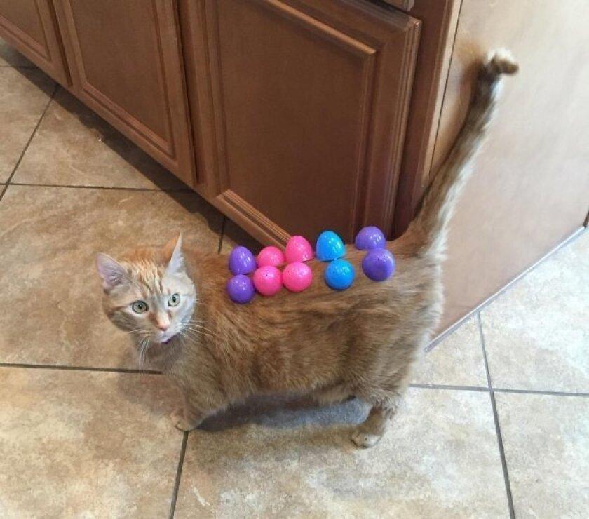 Easter cat.