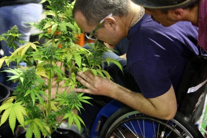 La discusión para la regulación en esta materia arrancó con la aprobación en 2015 del suministro de derivados de la marihuana para varios niños enfermos y un fallo histórico de la Suprema Corte emitido en noviembre pasado que permitió a cuatro ciudadanos cultivar y consumir el producto con fines recreativos. EFE