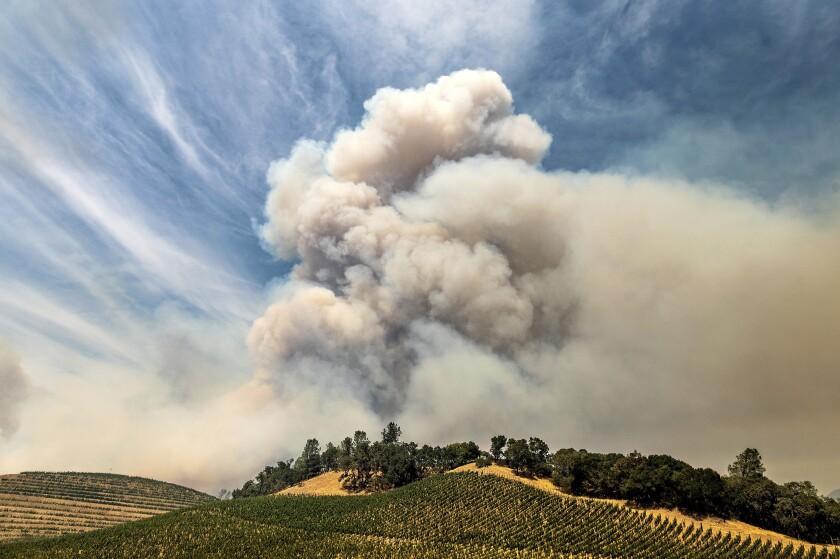 Smoke over a vineyard in Napa County