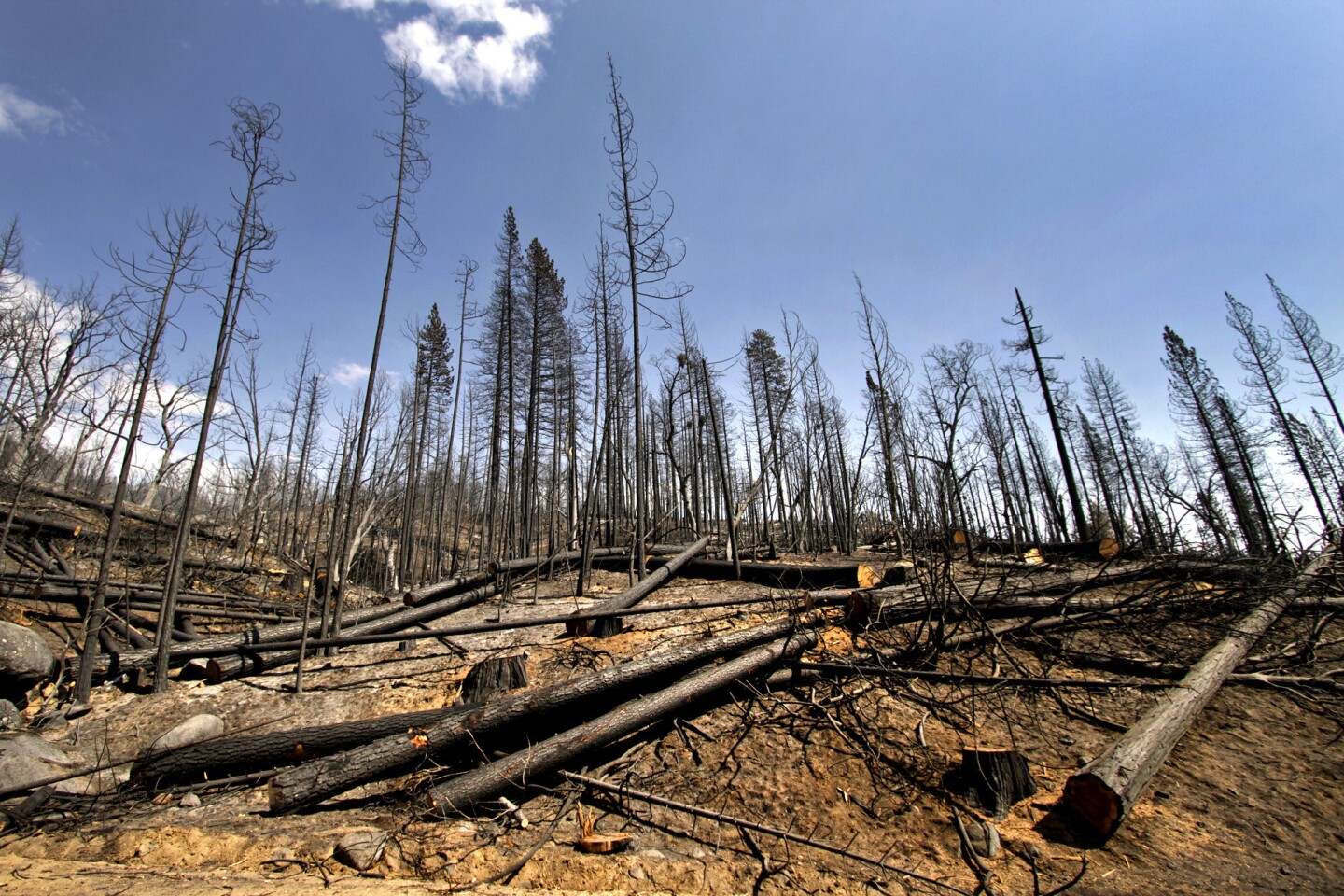 A view of the burned area near Granite Creek in the Stanislaus National Forest.