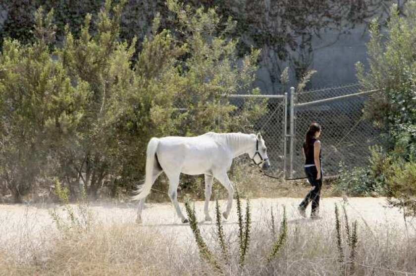 Burbank eases restrictions on building horse stables in Rancho area