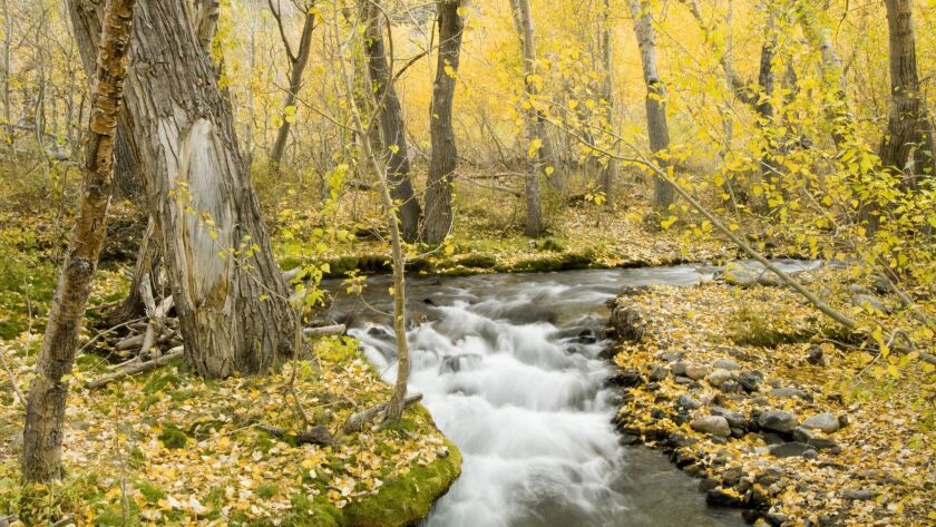 Fall aspen and flowing creek, Eastern Sierra, California. ROYALTY FREE, MAY BE REUSED. ** TCN OUT **