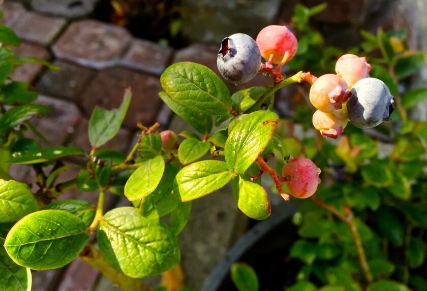 Gardening Sustainability Basics