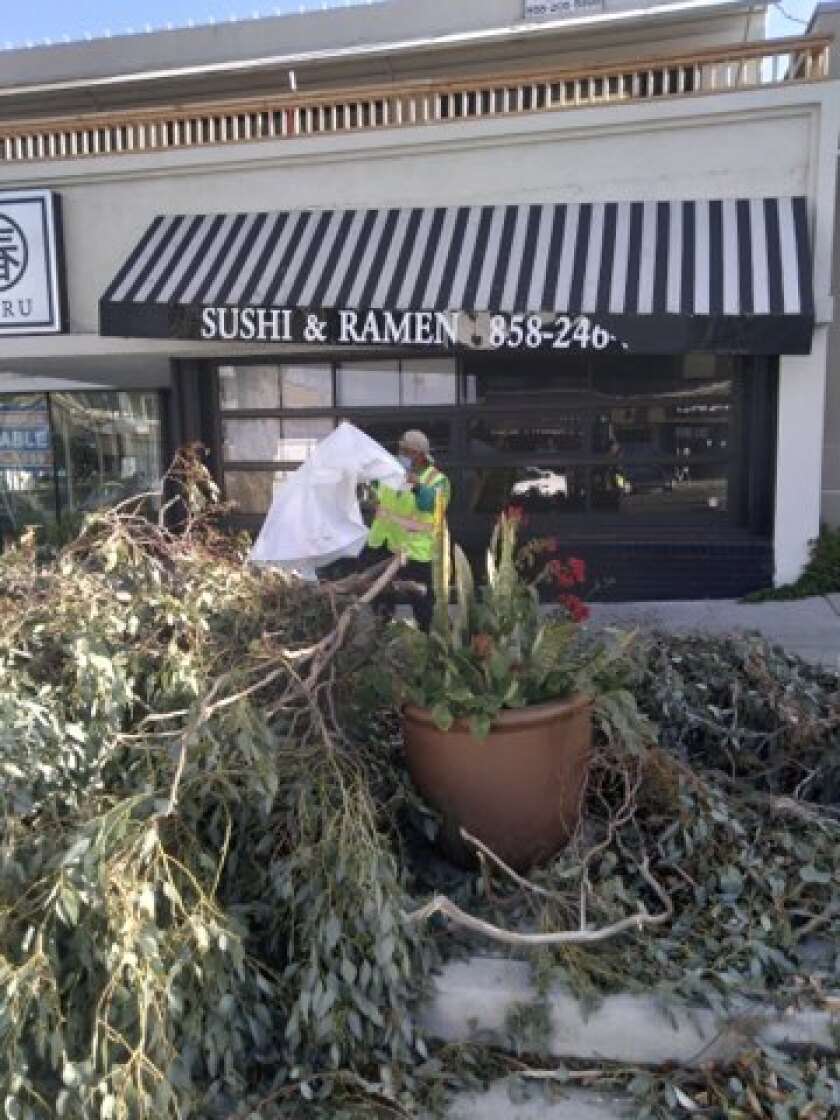 A cleanup crew removes tree debris in La Jolla after the recent storms.