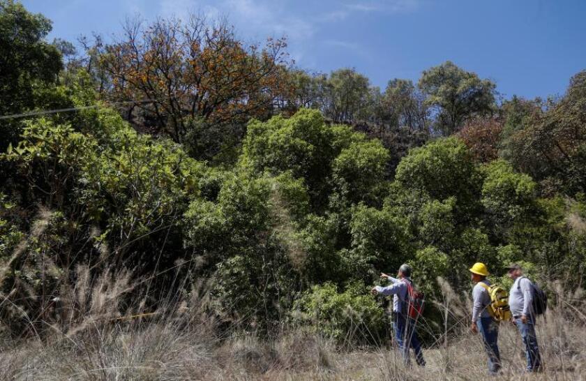Ambientalistas señalan que plan mexicano de reforestación puede dañar bosques