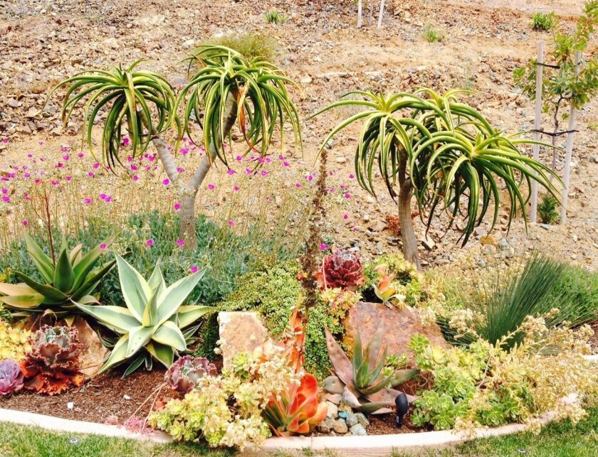 """Creative and Colorful Succulent Landscapes"" will teach you how to replace a water-intensive lawn with a water-wise succulent landscape that is lush and colorful. Courtesy photo"