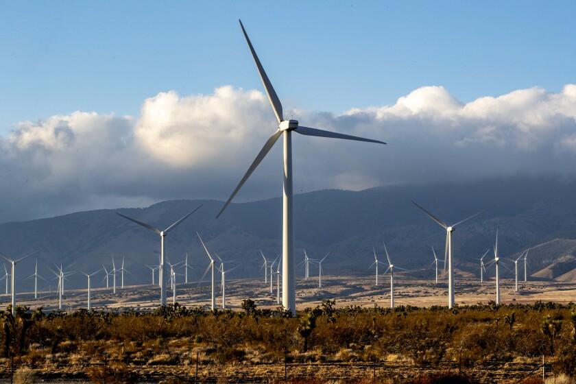 Landscape photo of wind turbines.