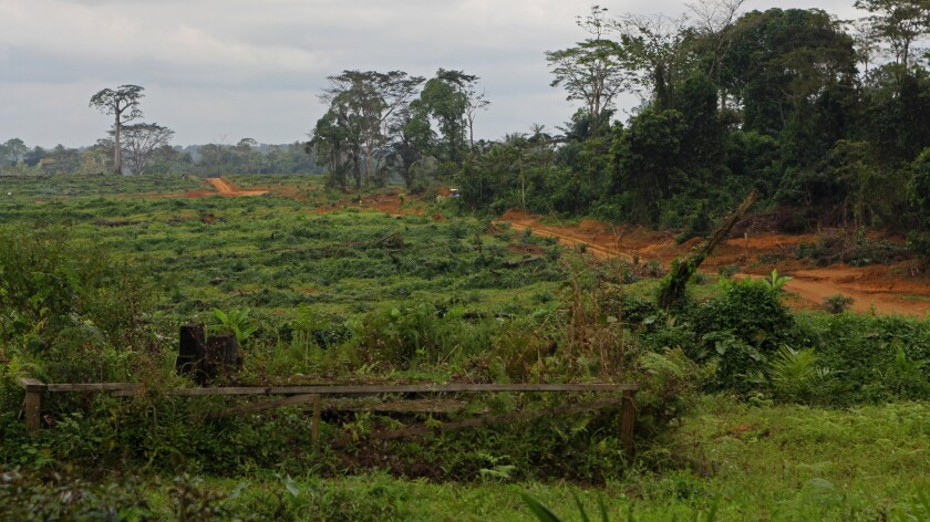 The remnants of a community cemetery in a Sinoe County, Liberia, are shown.