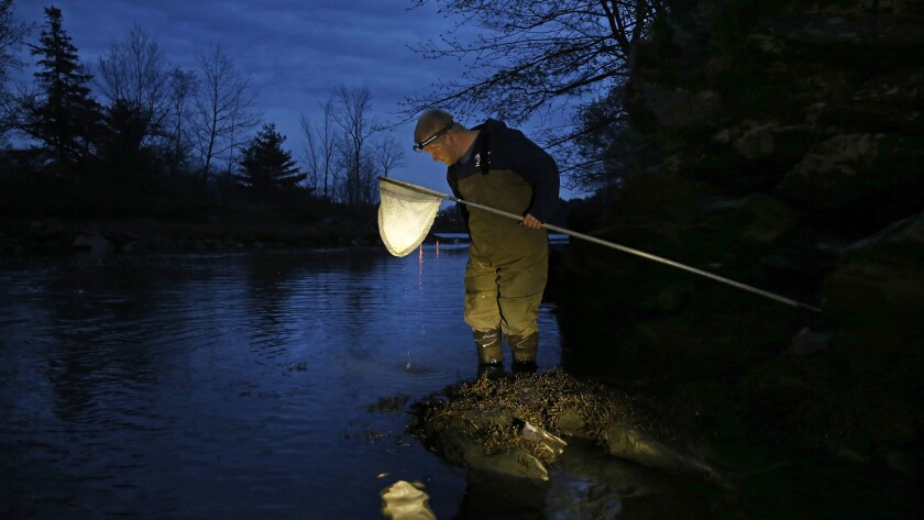 Henry McVane, 25, fishes for eels in a river near his home in Scarborough, Maine.