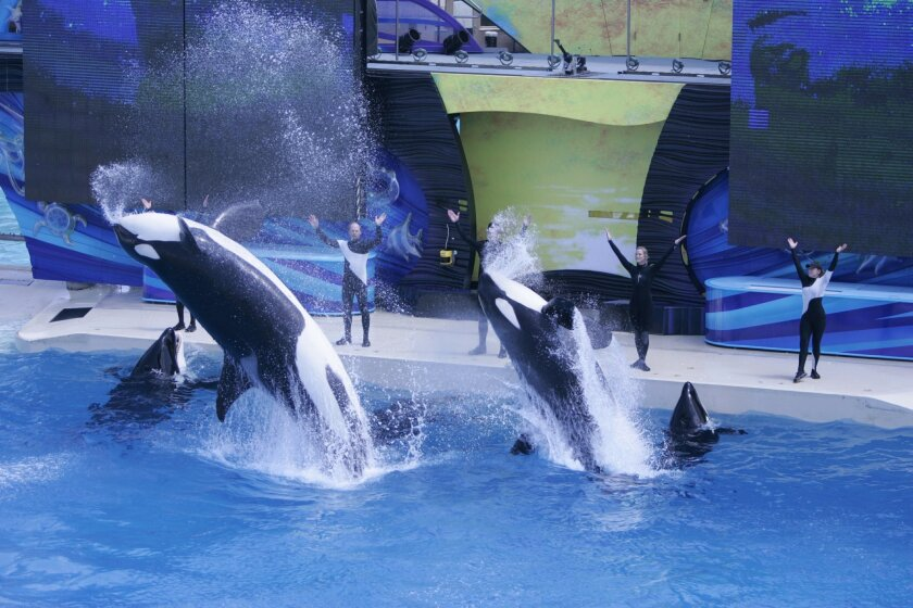 Blackstone at one time was the majority owner of SeaWorld,it still is the single largest shareholder in the theme park company.