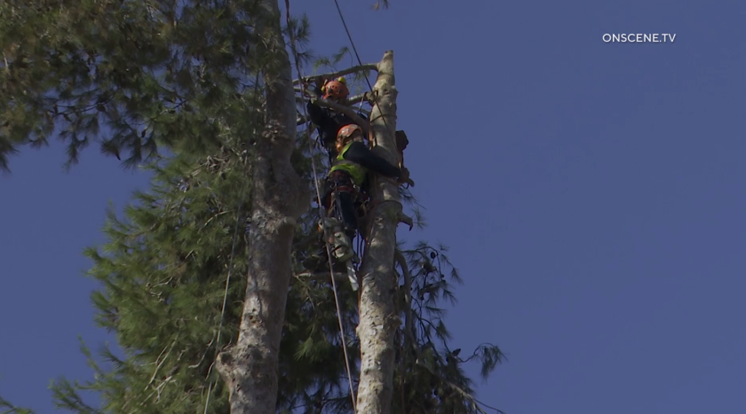 tree rescue onscene tv.png