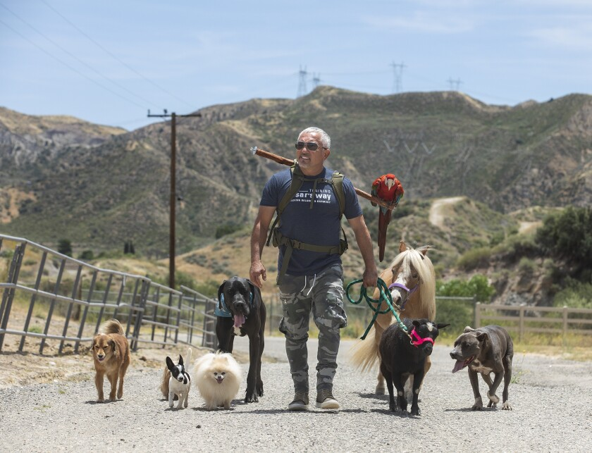 Cesar Millan goes for a walk on his Santa Clarita ranch with his dogs, miniature horse, goat and macaw.