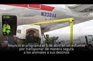 Aerolíneas lanzan un programa de seguridad para mascotas