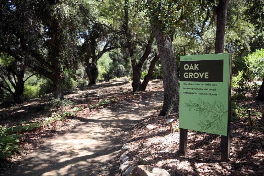 A path wanders through the dappled shade of the California Botanic Garden's Oak Grove.