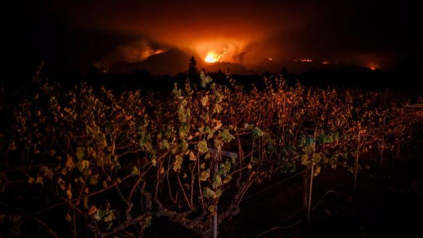Wildfire seen from a vineyard