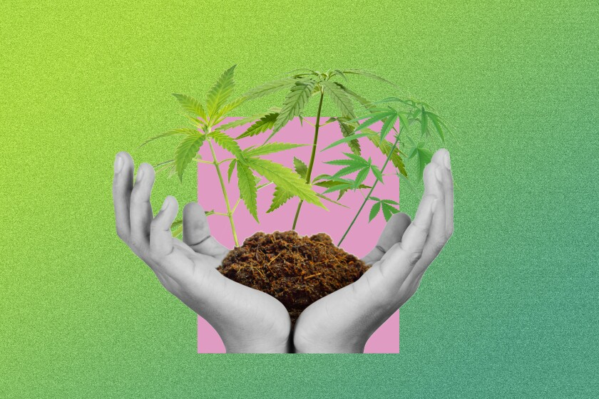 Graphic of cupped hands holding soil with marijuana plants springing out.