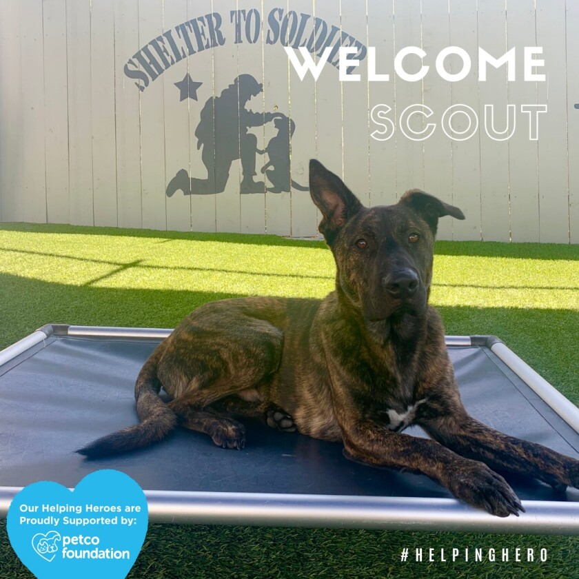 STS service dog Scout