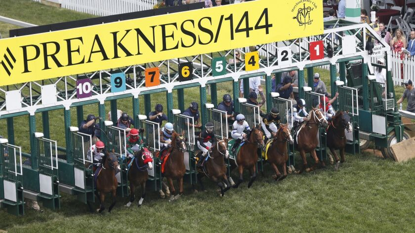 Horses move on the turf in the fifth race ahead of the 144th Preakness Stakes horse race at Pimlico