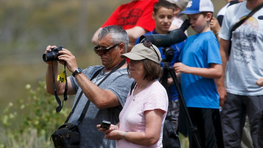 Tourists watch while a bears move around in a meadow in the Lamar Valley near the Petrified Tree in the Northern area of Yellowstone National Park.