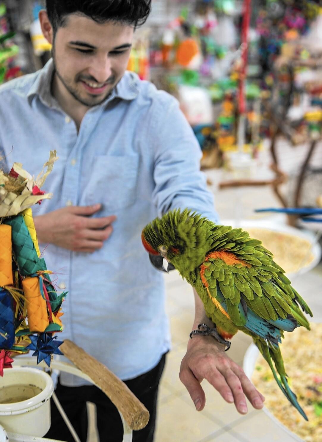 Hansen: Man's other best friend: the bird - Los Angeles Times