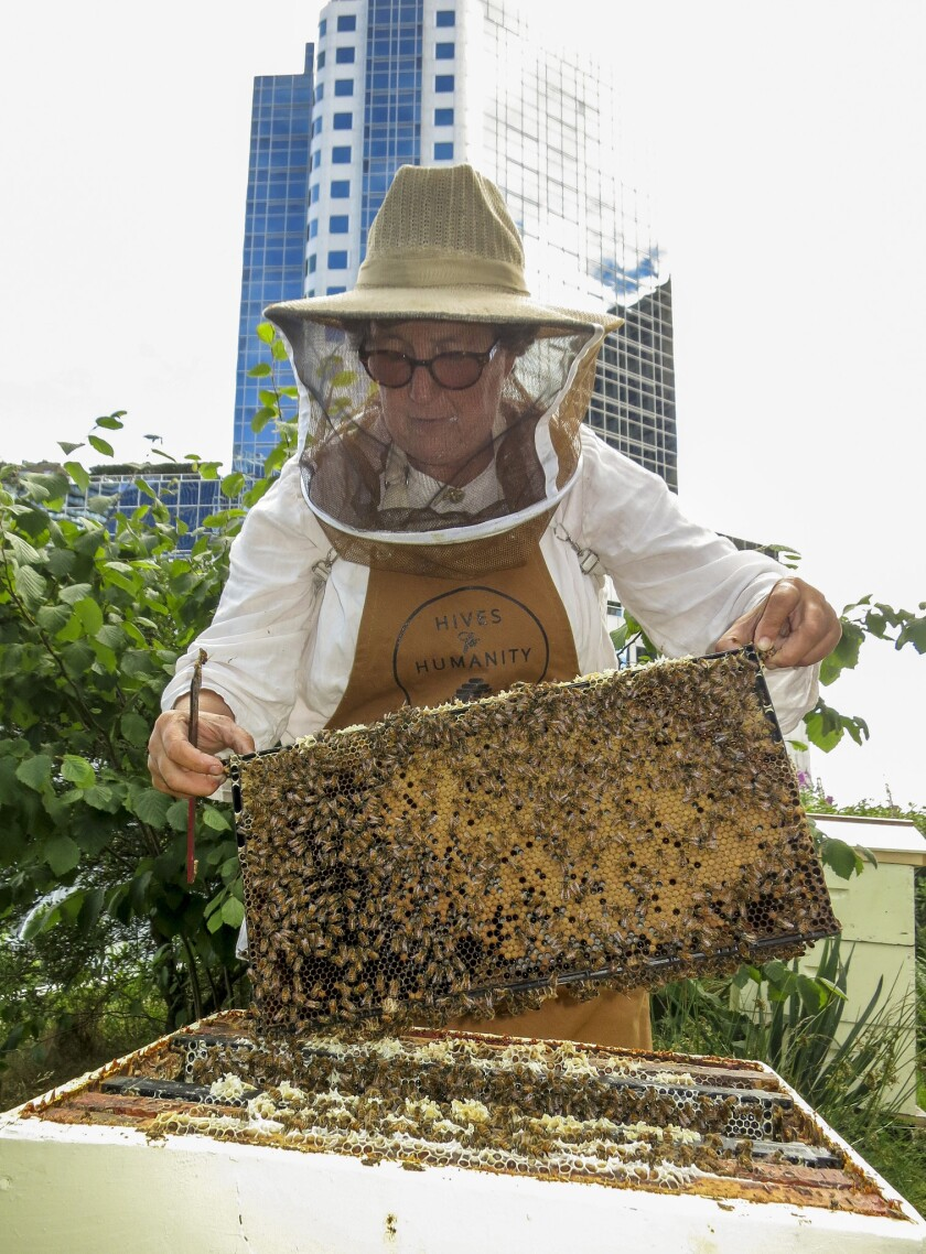 Vancouver, Canada - Beekeeper, Julia Common, working with bees during a tour of the rooftop apiary a