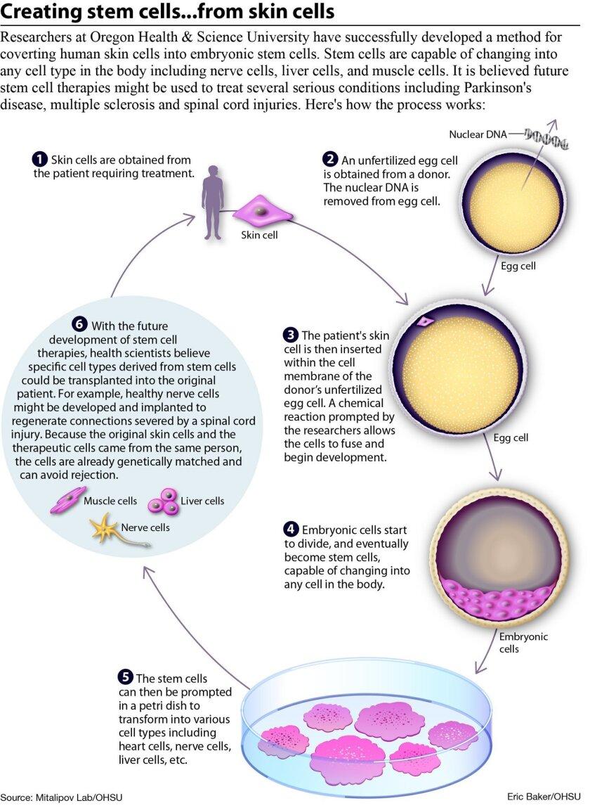 stem-cell-breakthrough-2013