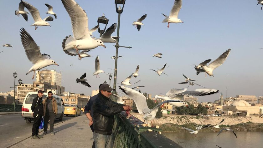 Feeding the seagulls hanging out near the Ahrar bridge is a popular afternoon activity in Baghdad.