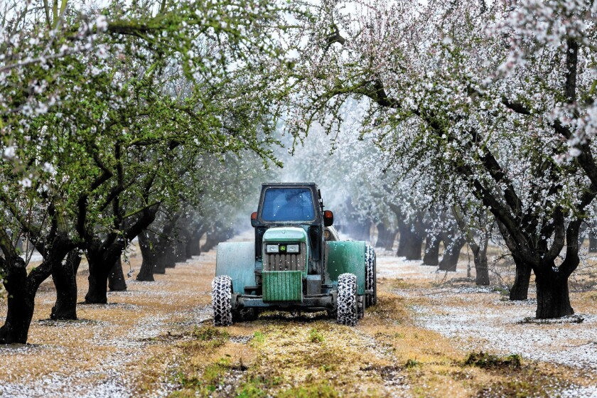 A farmworker sprays herbicide on an almond farm. Agriculture has suffered severe cutbacks as a result of the drought but critics of Brown's plan say more regulation of groundwater use is needed.