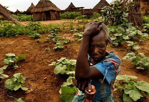Darfur village springs back to life