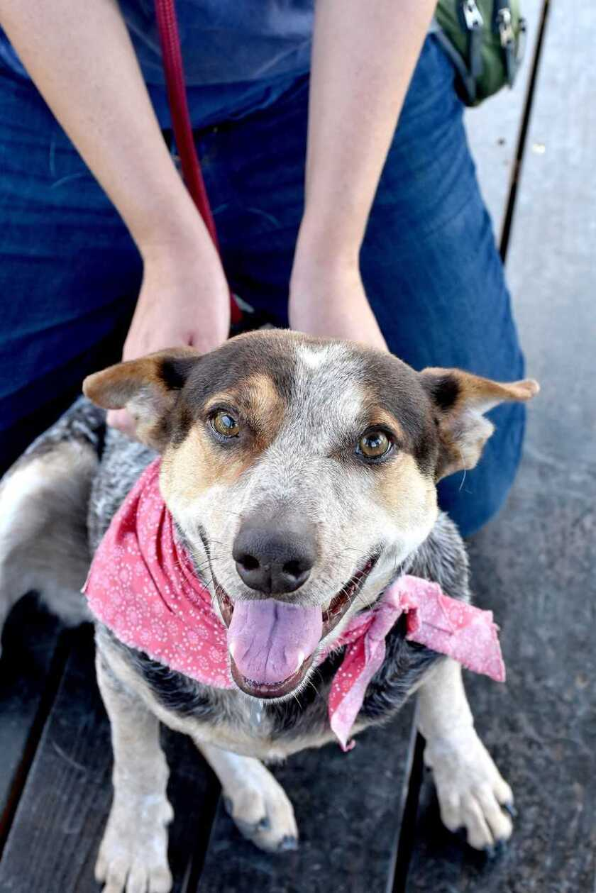 The pet of the week at the Helen Woodward Animal Center in Rancho Santa Fe.