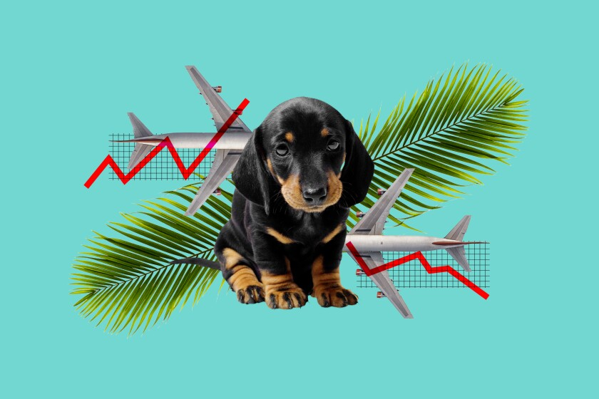 A photo illustration of a puppy, airplanes, palm fronds and a downward-trending economic chart
