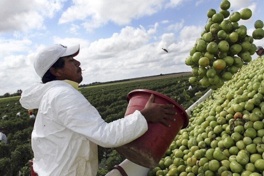 U.S.-Mexico tomato fight puts jobs, prices on the line
