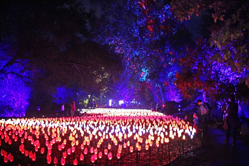 Botanical gardens are lighting up all over Southern California, including Descanso Garden's Enchanted Holiday Light Show, which runs through Jan. 5.