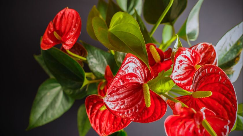 Ð¡are and growing of domestic plants.