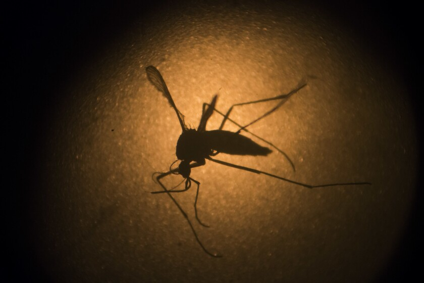 Mosquitoes can lay 100 eggs at one time.