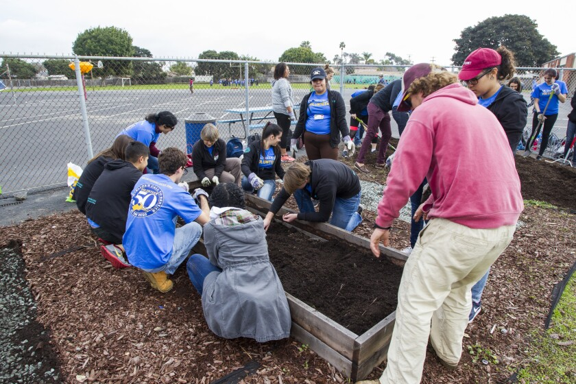 Volunteers dig into a day of service honoring Dr. Martin Luther King Jr. at Oneonta Elemntary School in Imperial Beach. Projects included gardening, painting a handball wall, making benches and organizing the classroom libraries.