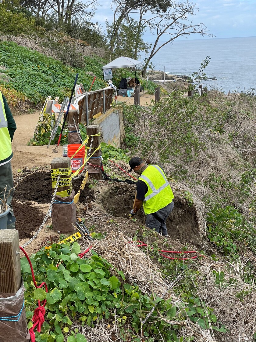 Crew members with Black Sage Environmental work to stabilize a slope next to the Coast Walk Trail this month.