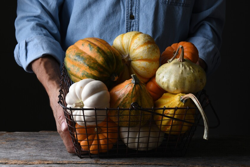 Pumpkins, squashes and gourds