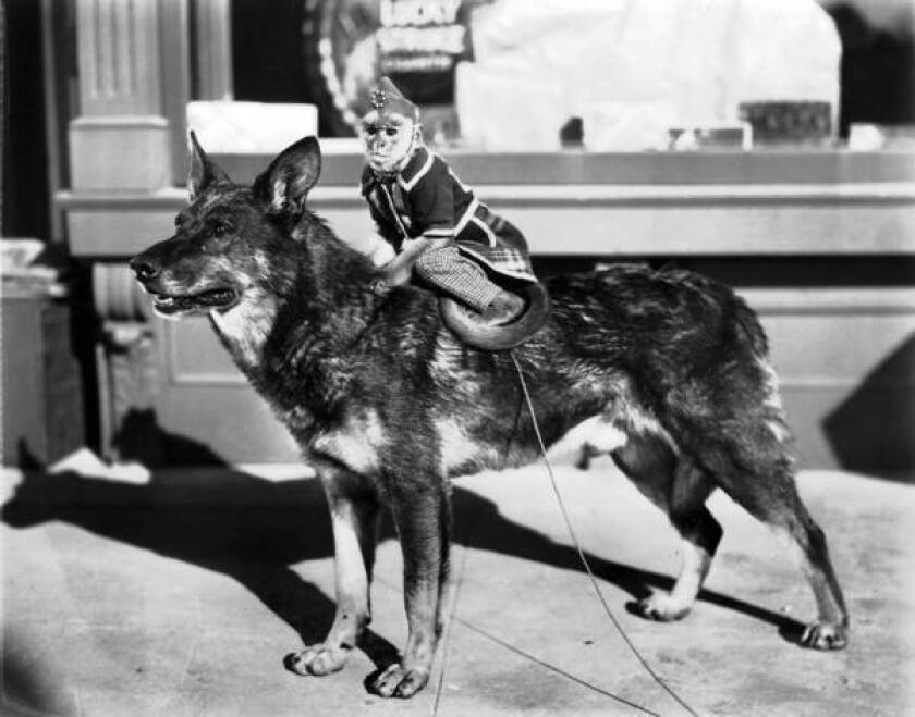 Rin Tin Tin carries a monkey.