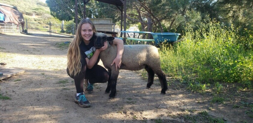 FFA Student Kaitlin Miller with her lamb, Zues.