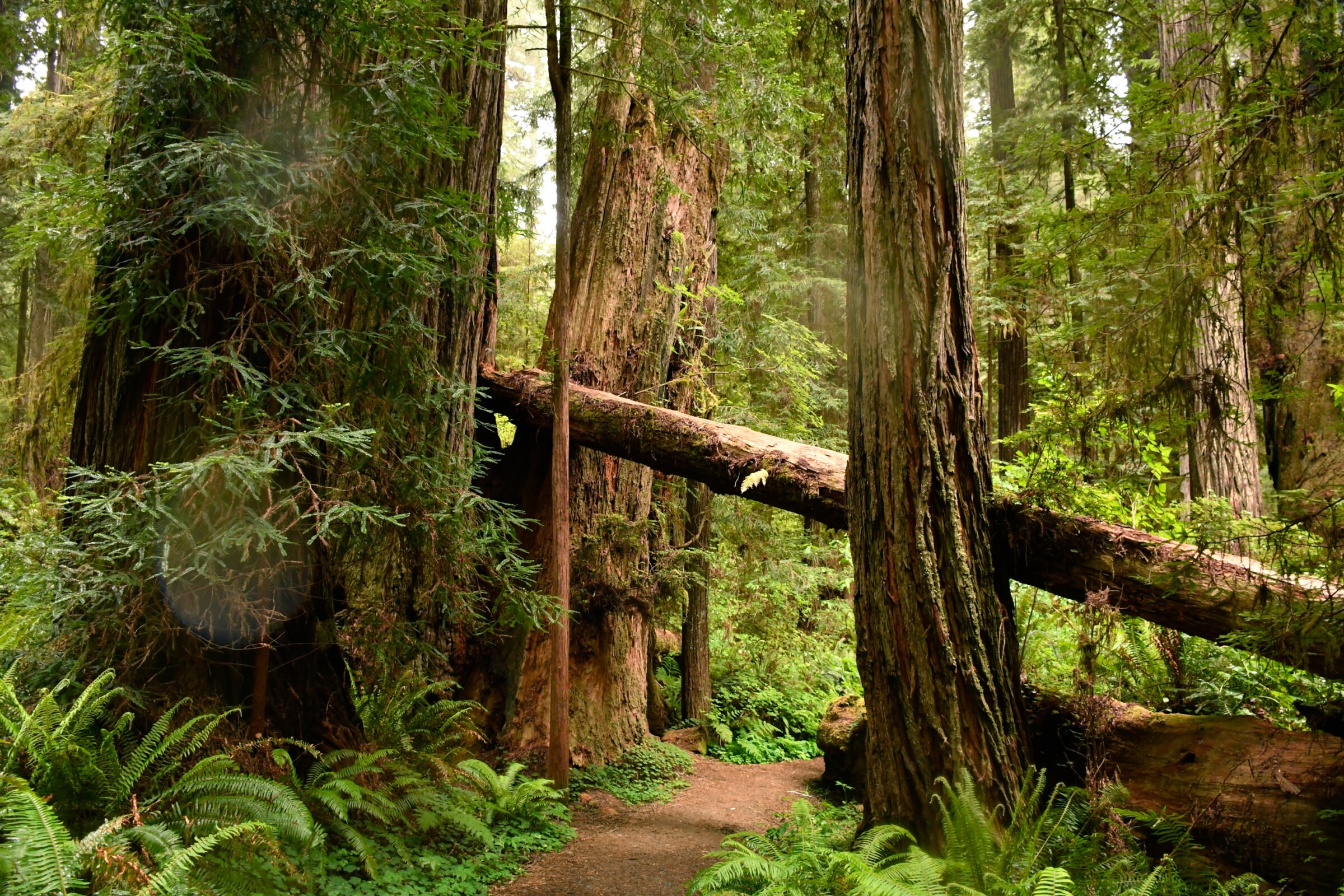 Prairie Creek Redwoods State Park in Humboldt County