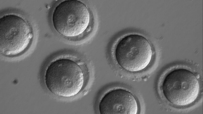 This image shows the first sign of successful in vitro fertilization.