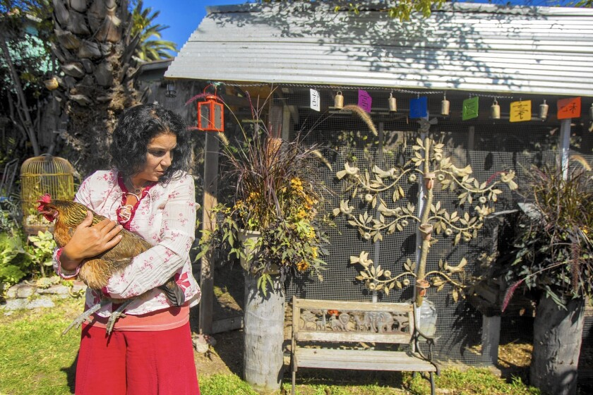 Reem Khalil Bell holds her hen Chicky Mama in front of her backyard chicken coop in Laguna Beach.
