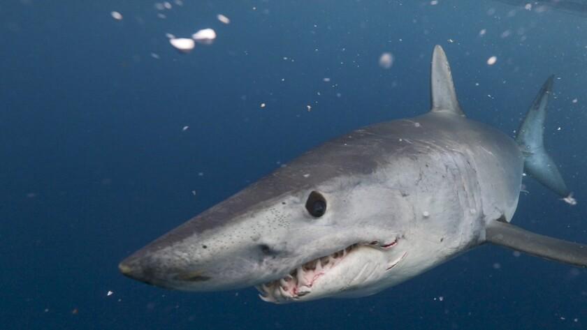 What's on TV Thursday, Aug  1, 2019: 'Shark Week' on