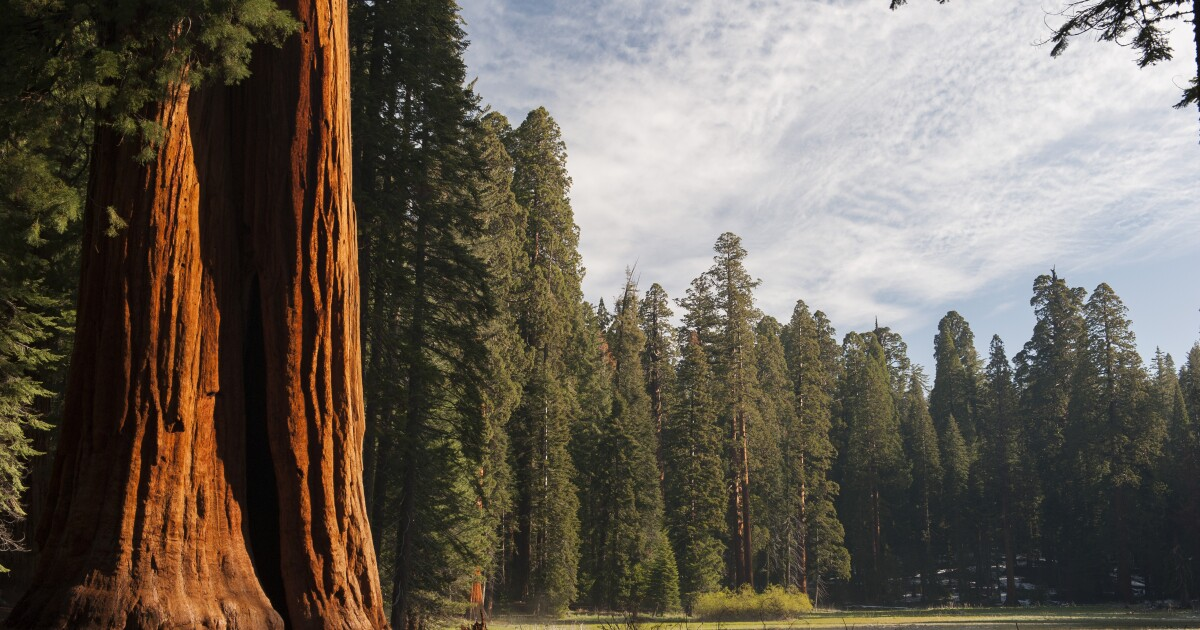 Armed suspect who threatened Sequoia National Park visitors wounded in shootout after pursuit - Los Angeles Times
