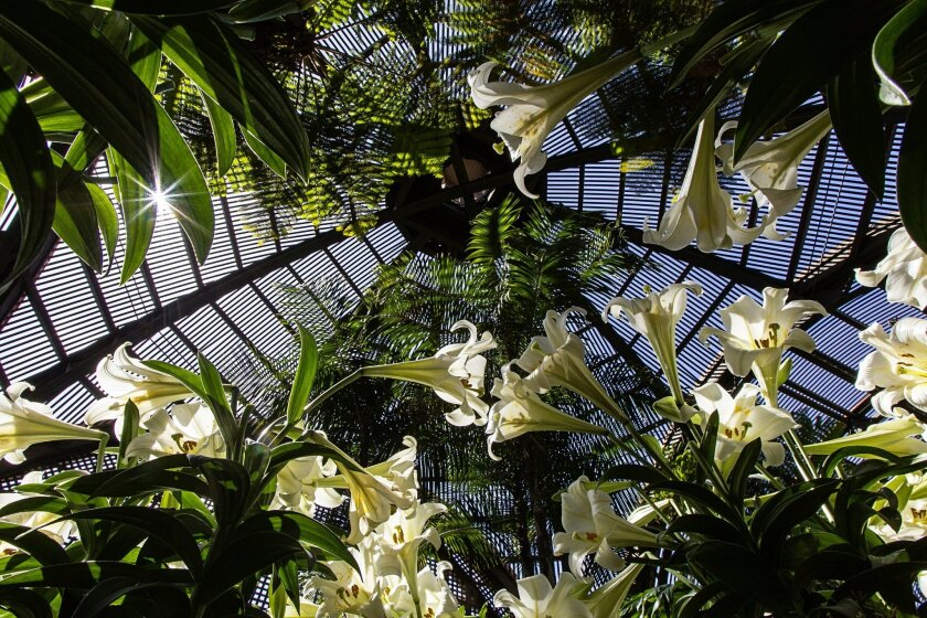 Indoor forest: The Botanical Building, a wondrous structure in lattice, steel and brick, serves as a backdrop for countless wedding parties and graduation celebrations. Designed by Carleton Winslow as one of the original 1915 expo buildings built to last, it measures 250 feet long, 75 feet wide